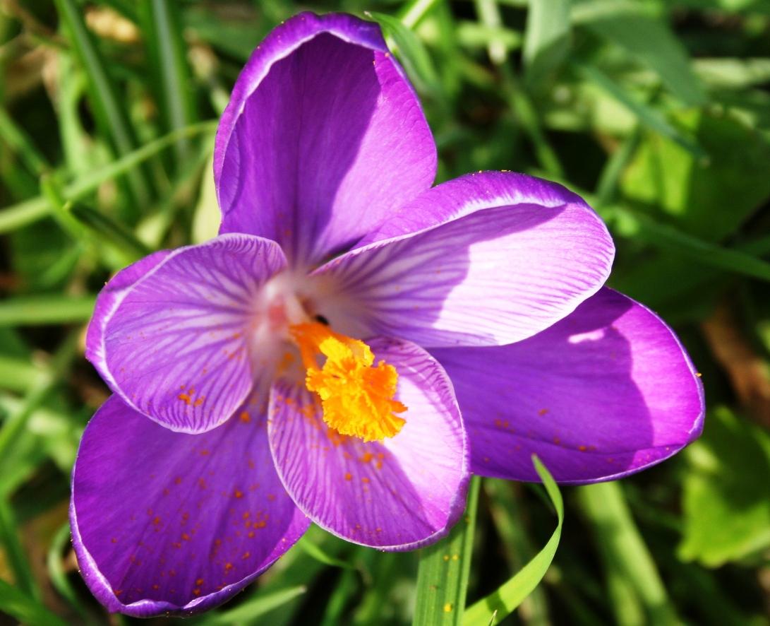 Весенняя красота первоцветов